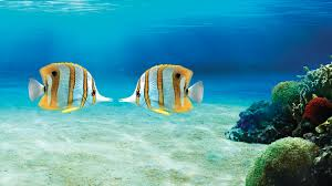 In Love prospects for Pisces ascendant  Life tips from
